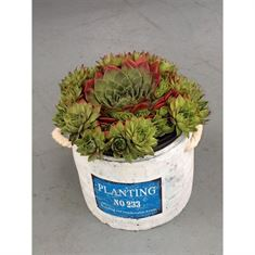Afbeelding van keramiek pot 14 cm planting