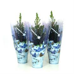 Afbeelding van  Picea glauca Conica blauwe hoes