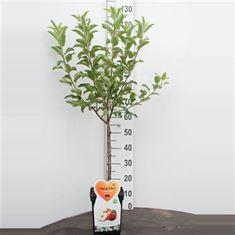 Afbeelding van Appel Dwergfruit - Mini-appel 5 liter