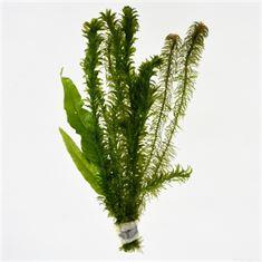 Afbeelding van Viskom bosjes (3 soorten)